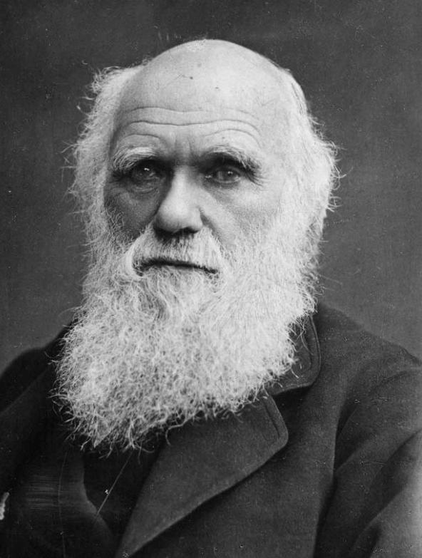 ¿Qué tienen en común la evaluación del desempeño y Darwin?
